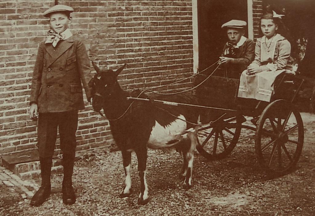 Op deze foto staat de 11 jarige Pieter Bos en zitten de 7 jarige Gijsbert (met de leidsels in zijn handen) en de 10 jarige Marretje Bos in hun speelrijtuig met een geit ervoor gespannen. De opname is gemaakt op de boerderij ter hoogte van Wagendijk 13 te Kockengen in het jaar 1916.