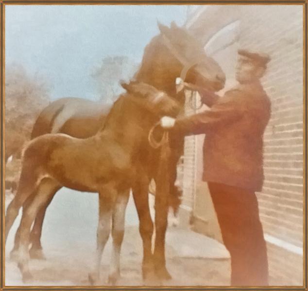 Teunis Bos op zijn boerderij in Kockengen, met één van z'n paarden die een veulen heeft gekregen. Kleurenfoto omstreeks 1925.